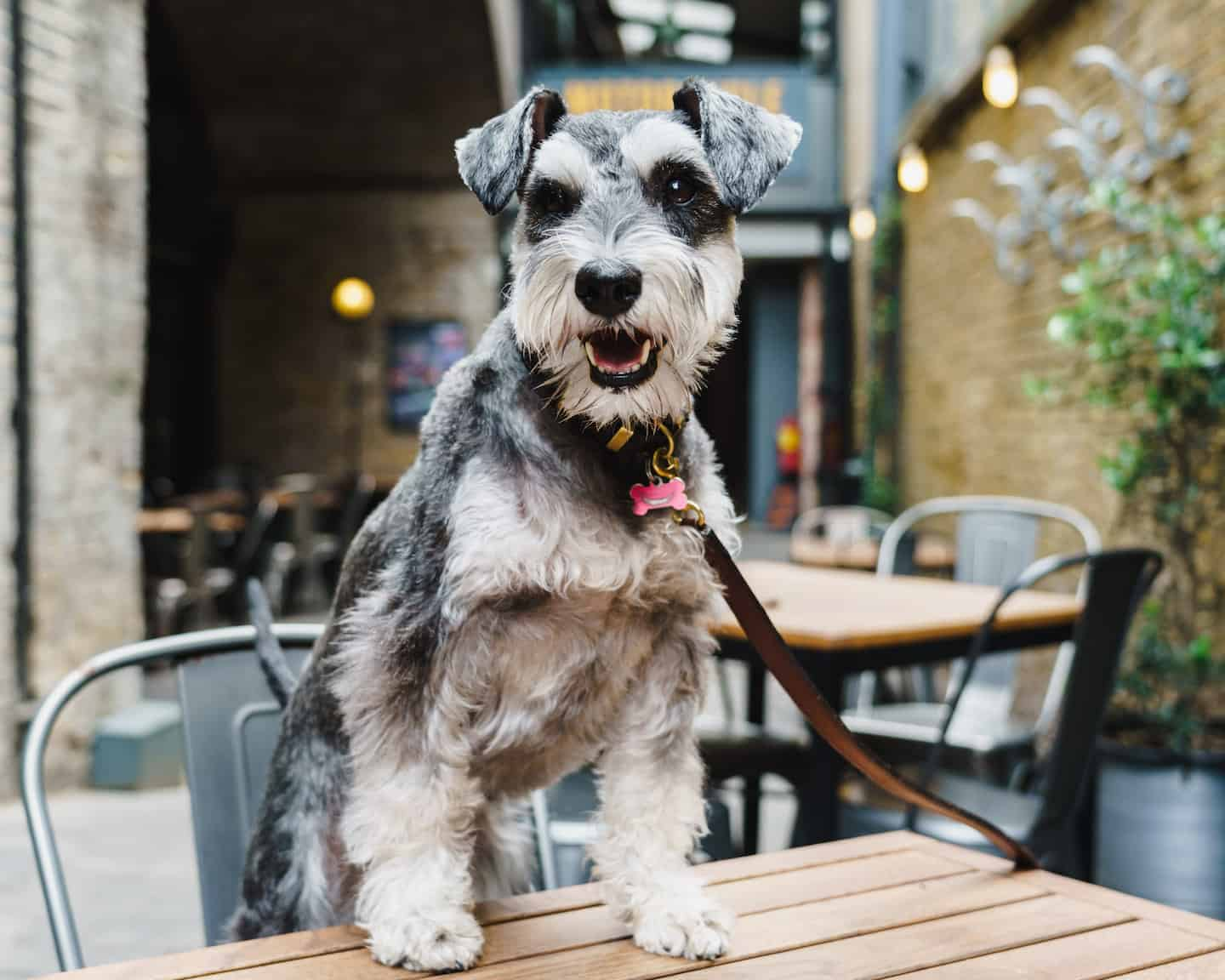 My Dog Friendly London By Rusty Red The Schnauzer | Dog Friendly Shoreditch and Hoxton Bike Shed 1