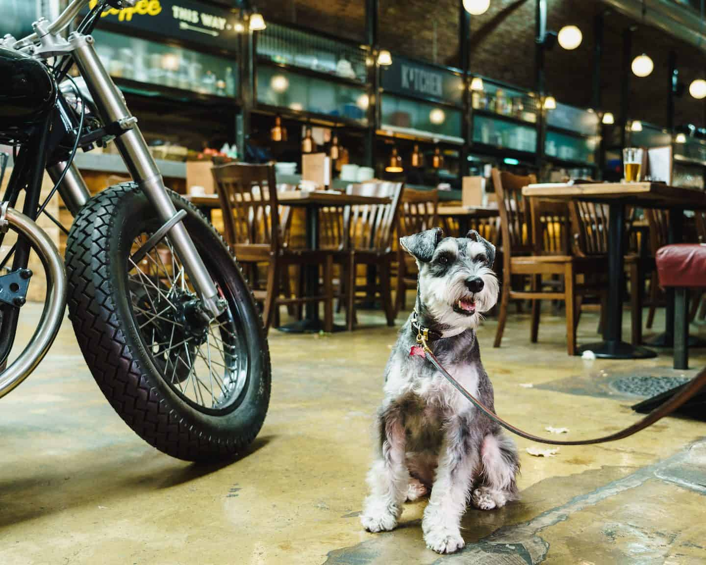 My Dog Friendly London By Rusty Red The Schnauzer | Dog Friendly Shoreditch and Hoxton Bike Shed 3