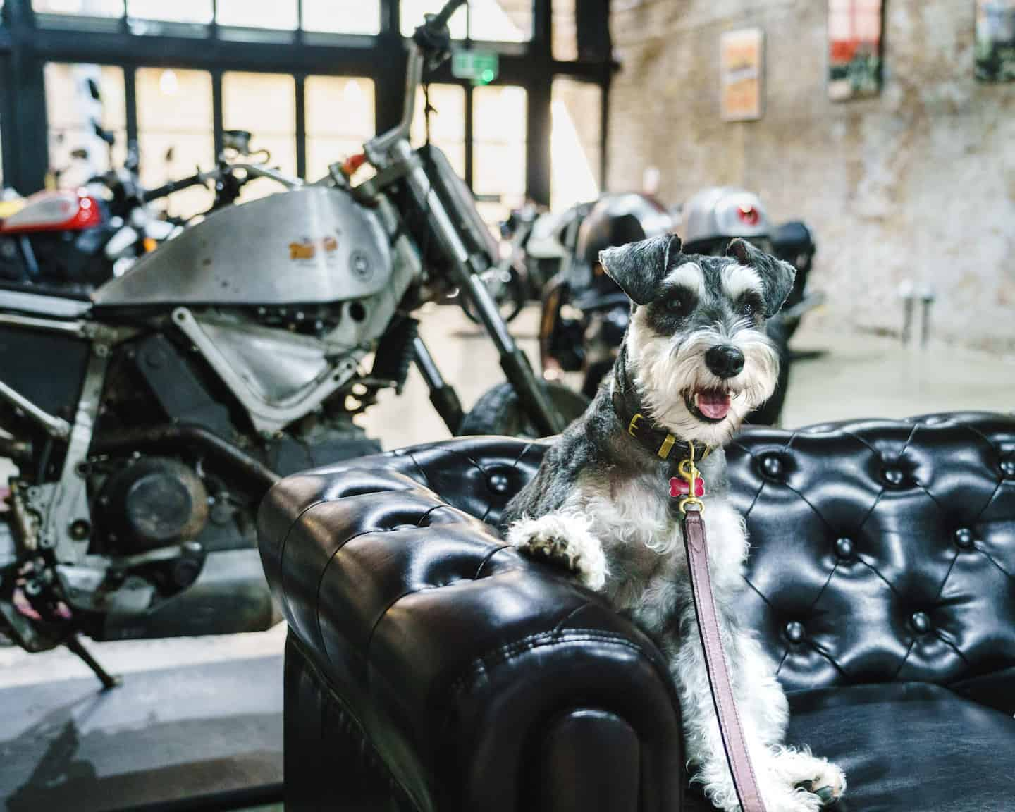 My Dog Friendly London By Rusty Red The Schnauzer | Dog Friendly Shoreditch and Hoxton Bike Shed 4