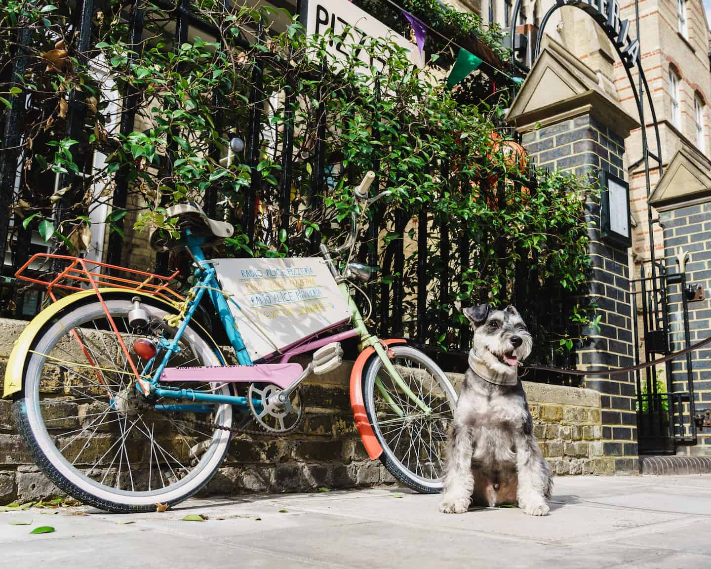 My Dog Friendly London By Rusty Red The Schnauzer | Dog Friendly Shoreditch and Hoxton Radio Alice 1