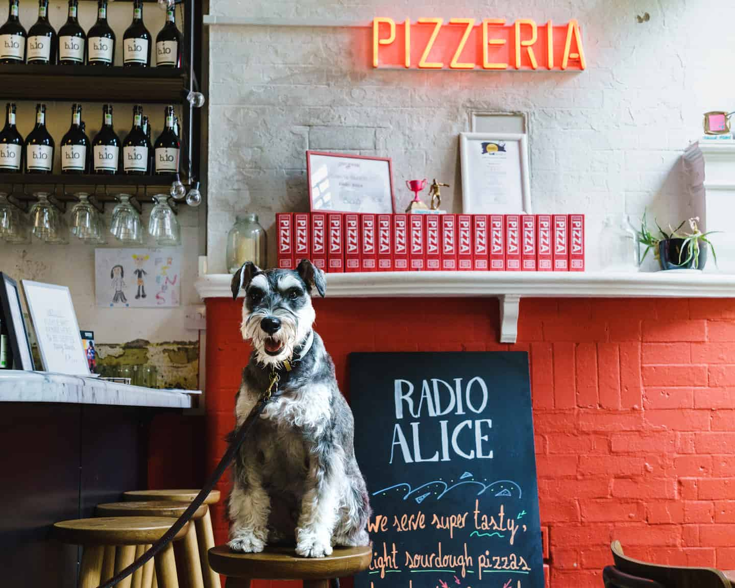 My Dog Friendly London By Rusty Red The Schnauzer | Dog Friendly Shoreditch and Hoxton Radio Alice 2