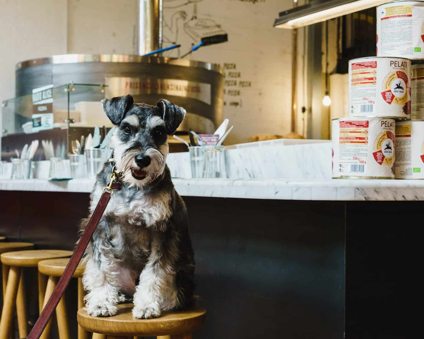 My Dog Friendly London By Rusty Red The Schnauzer | Dog Friendly Shoreditch and Hoxton Radio Alice 3