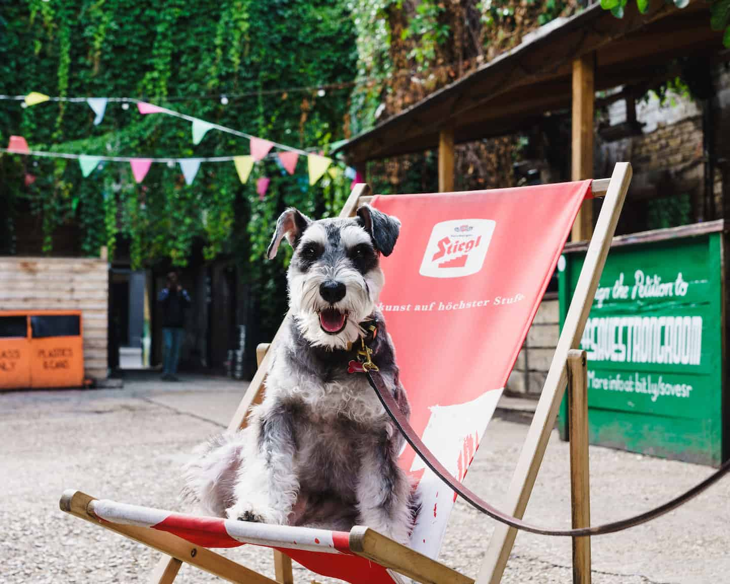 My Dog Friendly London By Rusty Red The Schnauzer | Dog Friendly Shoreditch and Hoxton Strongroom Bar & Kitchen 1