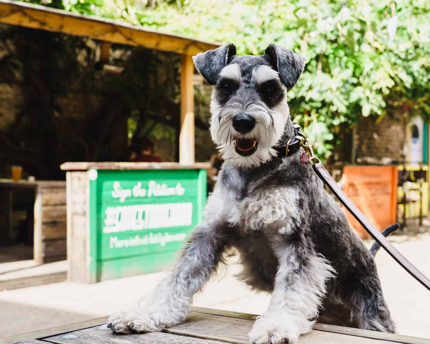 My Dog Friendly London By Rusty Red The Schnauzer | Dog Friendly Shoreditch and Hoxton Strongroom Bar & Kitchen 3