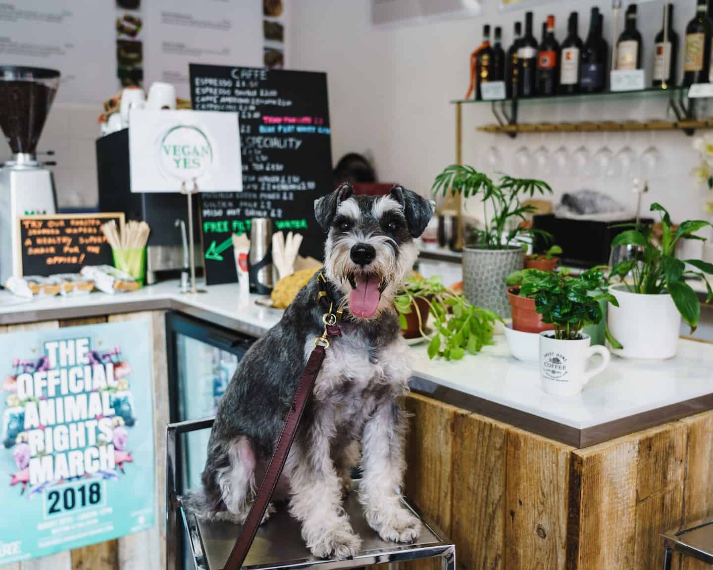 My Dog Friendly London By Rusty Red The Schnauzer | Dog Friendly Shoreditch and Hoxton Vegan Yes 2