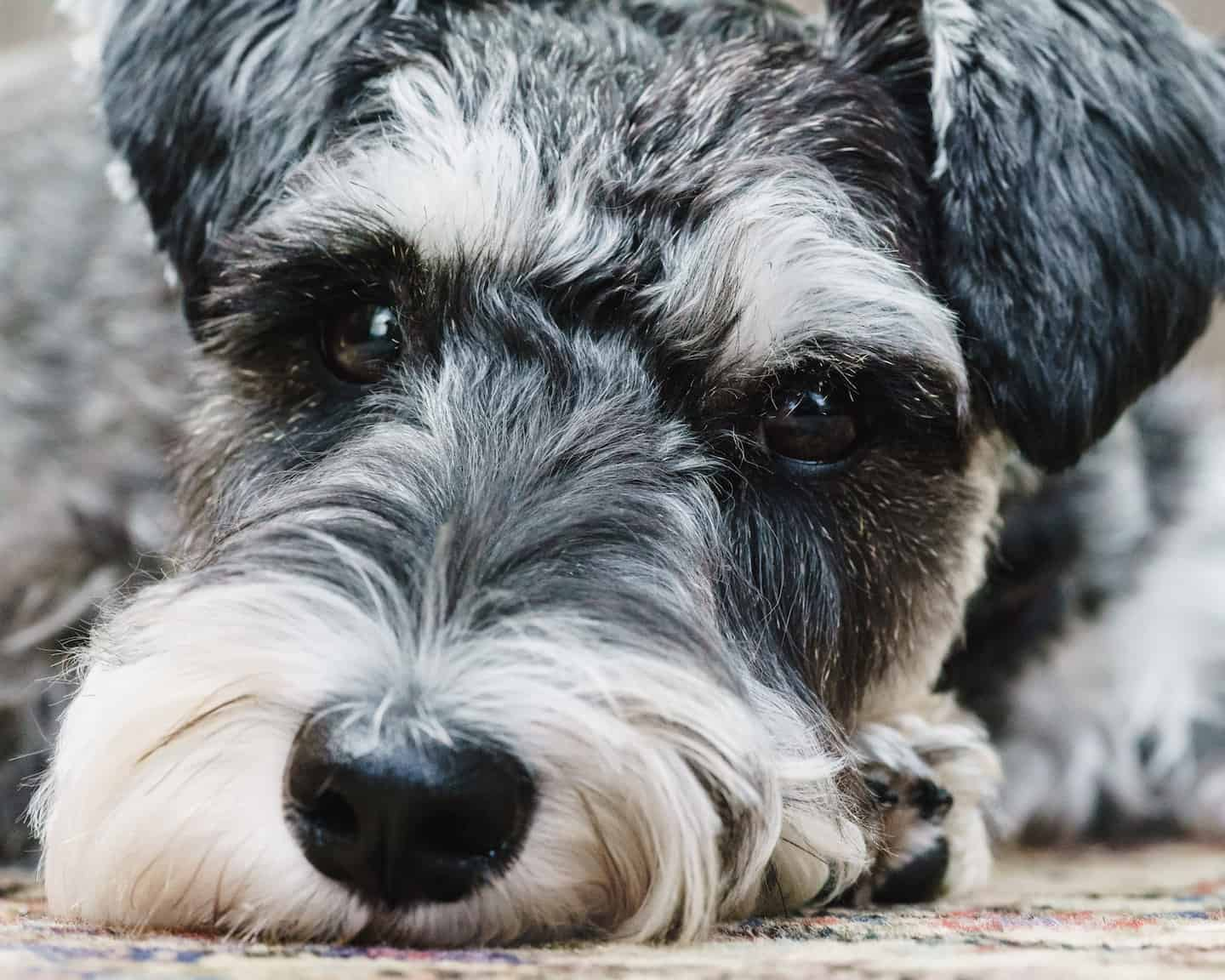 My Dog Friendly London By Rusty Red The Schnauzer | Dog Friendly Shoreditch and Hoxton