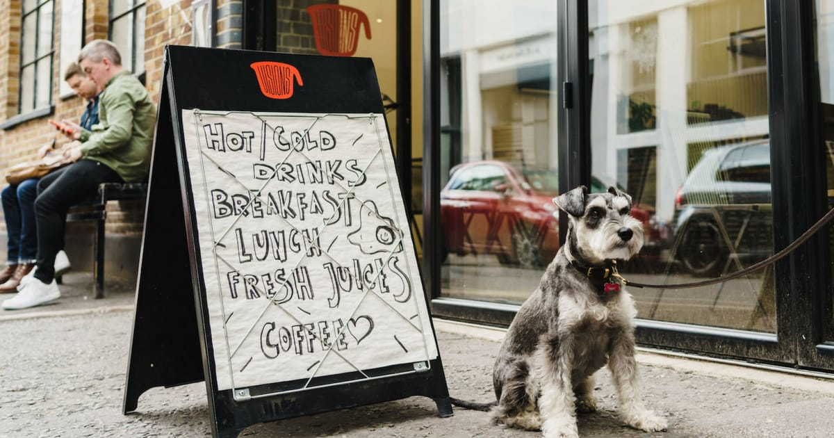 My Dog Friendly London Shoreditch & Hoxton | Rusty The Schnauzer