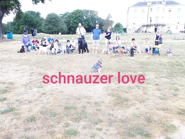 Schnauzers and Friends Walk August 2018