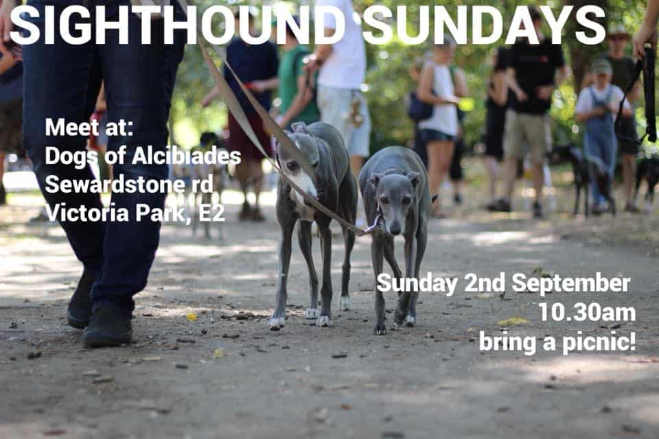 Sighthound Sundays Walk September 2018