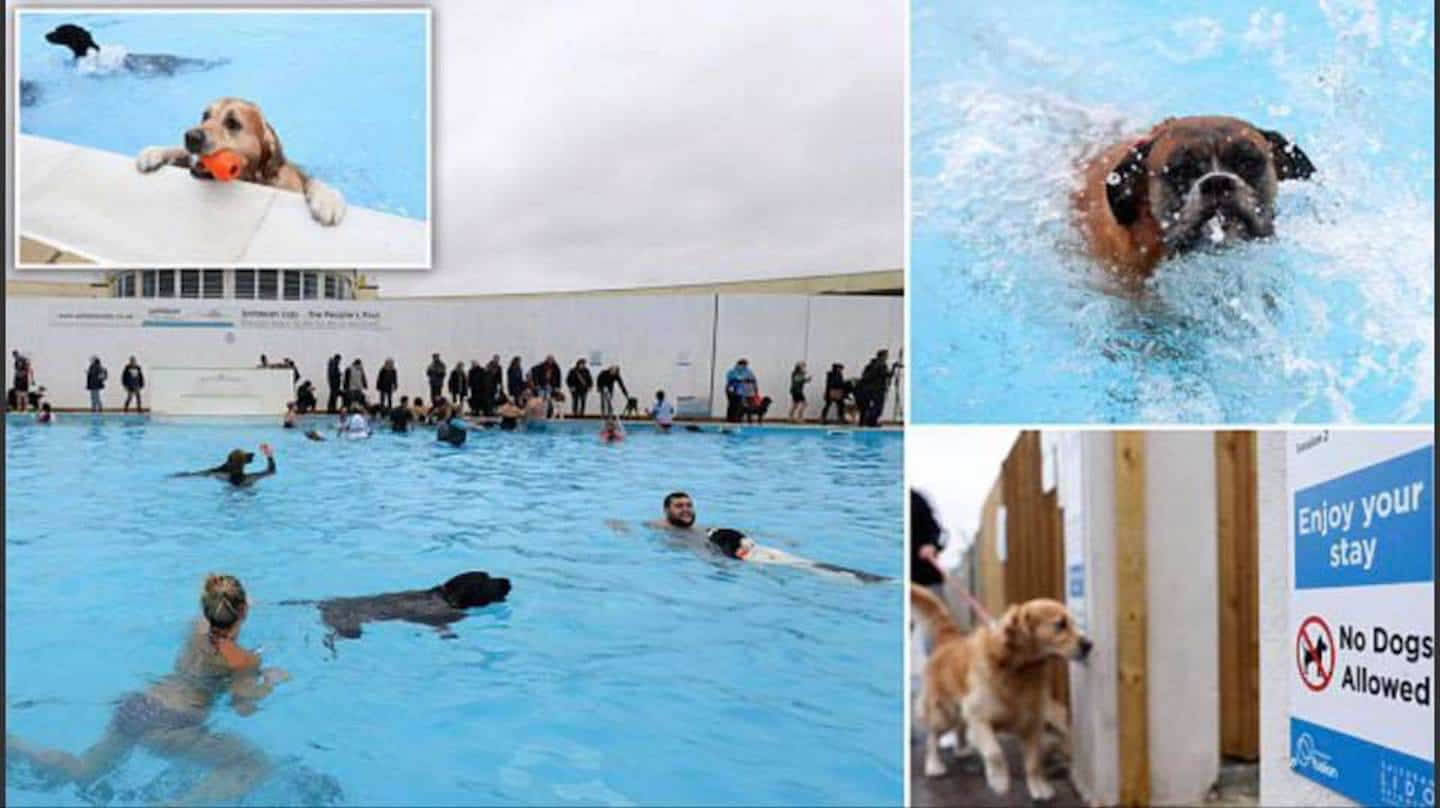 Swim With Your Dog At The Saltdean Lido Dog Swim 2018 -5