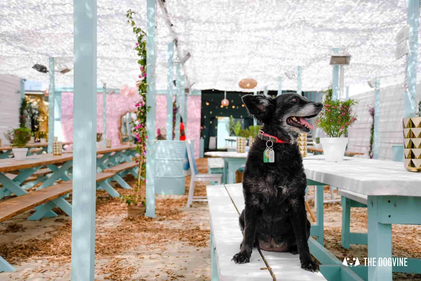The London Dog Agenda for this weekend | 11-12 August 1
