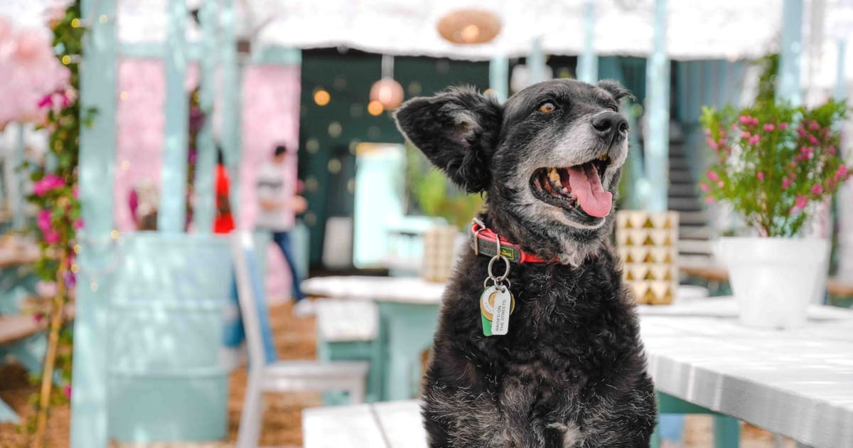 The London Dog Events Agenda For This Weekend | 11-12 August