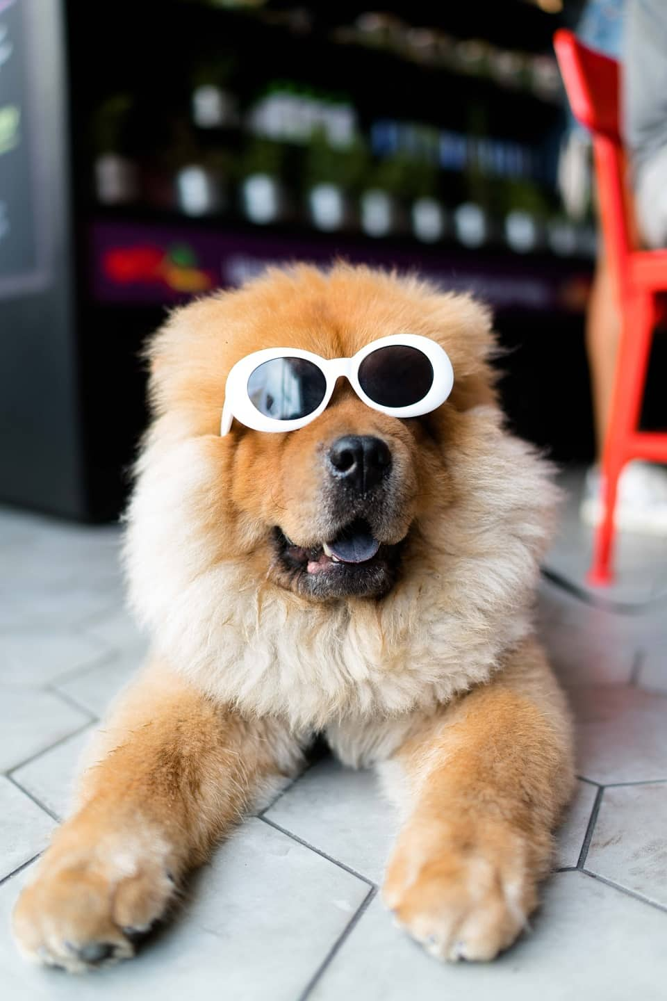 The London Dog Events Agenda For This Weekend 11-12 August Dog In Shades