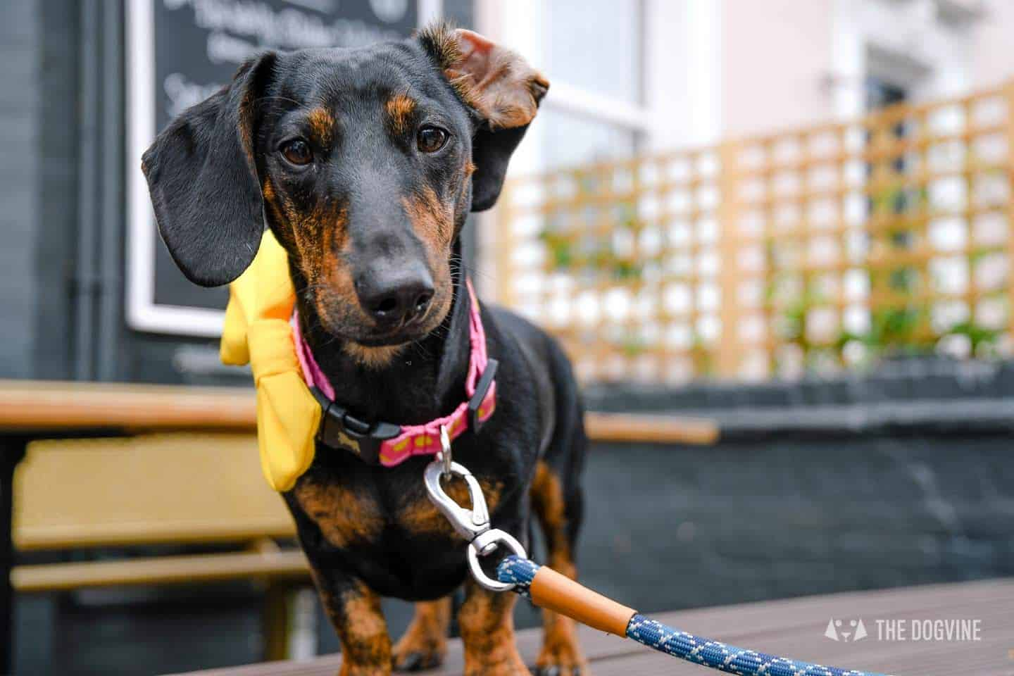 Your Guide to London Dog Events For 17-19 August - Conchita