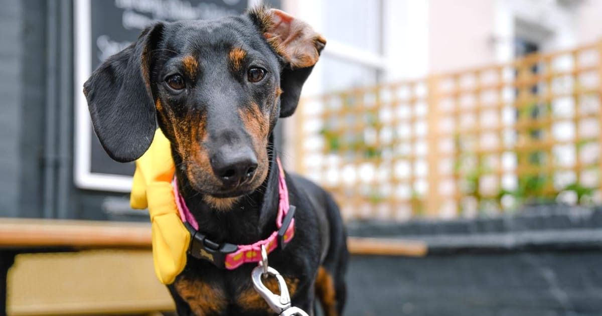 Your Guide to London Dog Events For 17-19 August