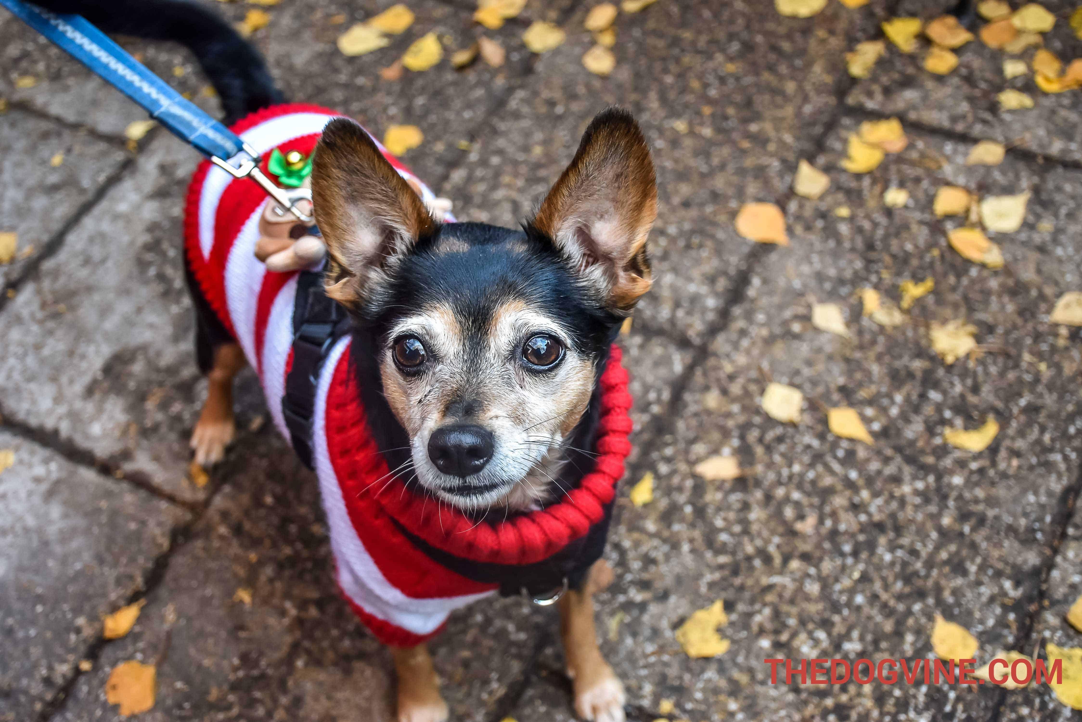 All Dogs Matter Santa Paws Christmas Fair 2018
