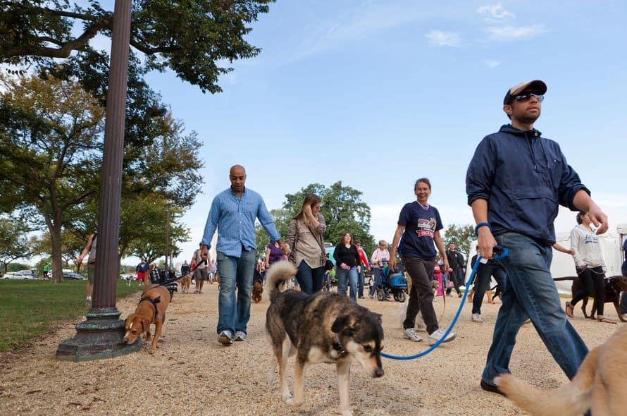 Battersea's Pet Memory Walk