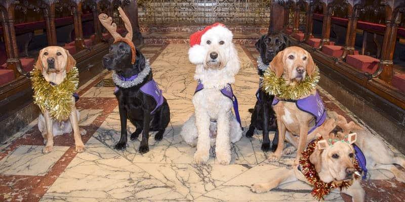 Canine Partners Carol Service 2018