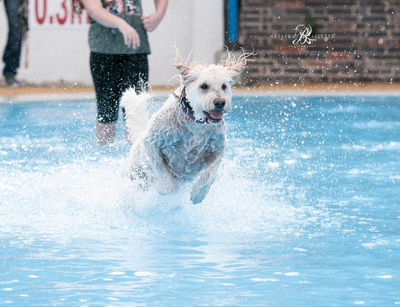 Hattie Saltdean Lido Dog Swim