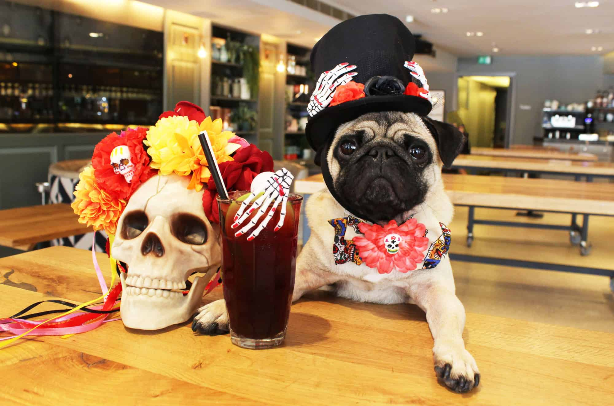 Pug Cafe London Day of the Dead Howl-O-Ween