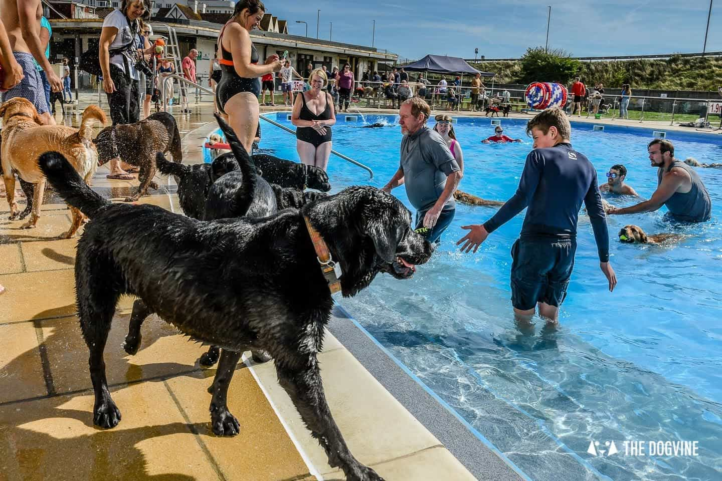 Saltdean Lido Dog Swim | A Fabulous Day Out for Dogs 1