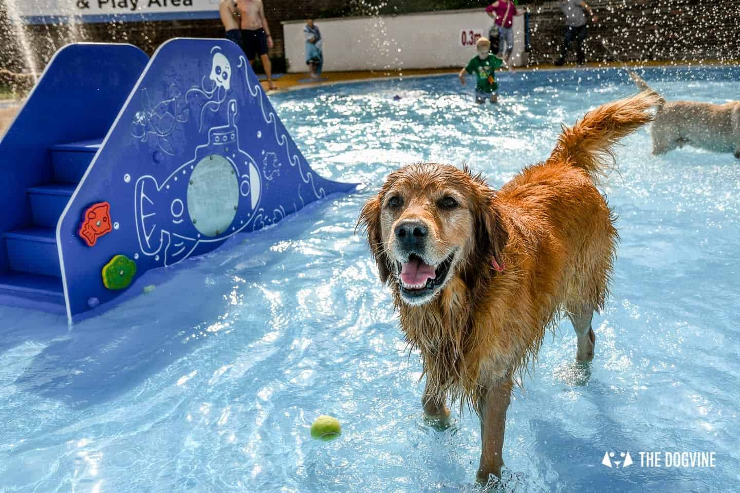 Saltdean Lido Dog Swim | A Fabulous Day Out for Dogs 12