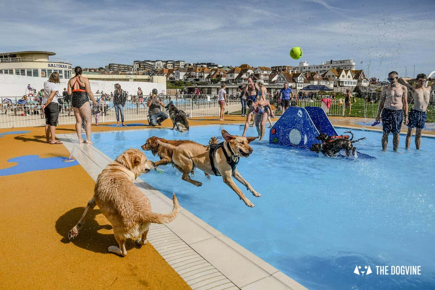 Saltdean Lido Dog Swim | A Fabulous Day Out for Dogs 13