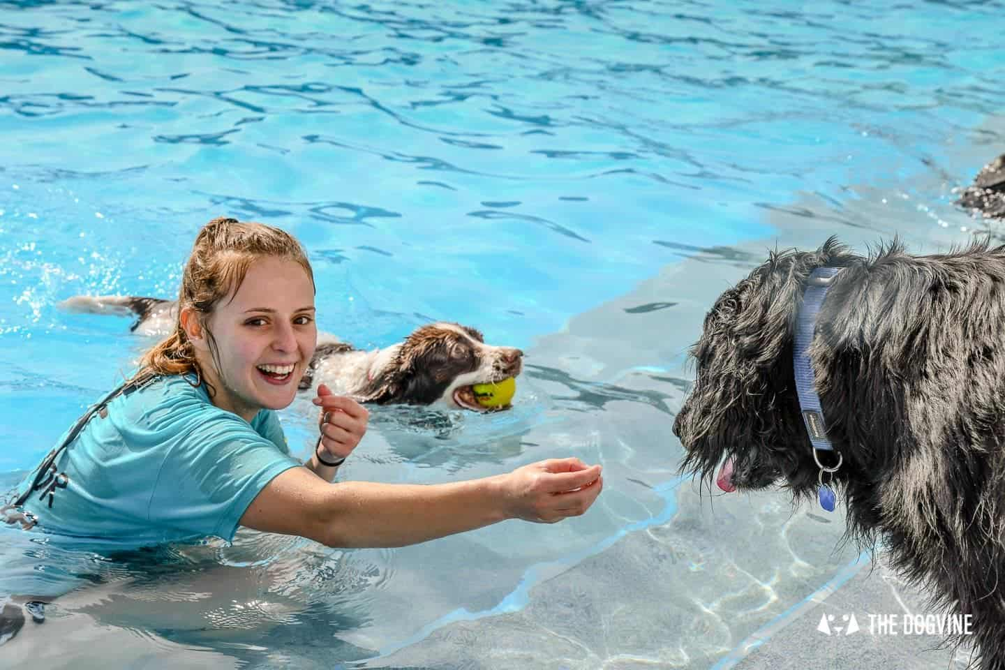 Saltdean Lido Dog Swim | A Fabulous Day Out for Dogs 17