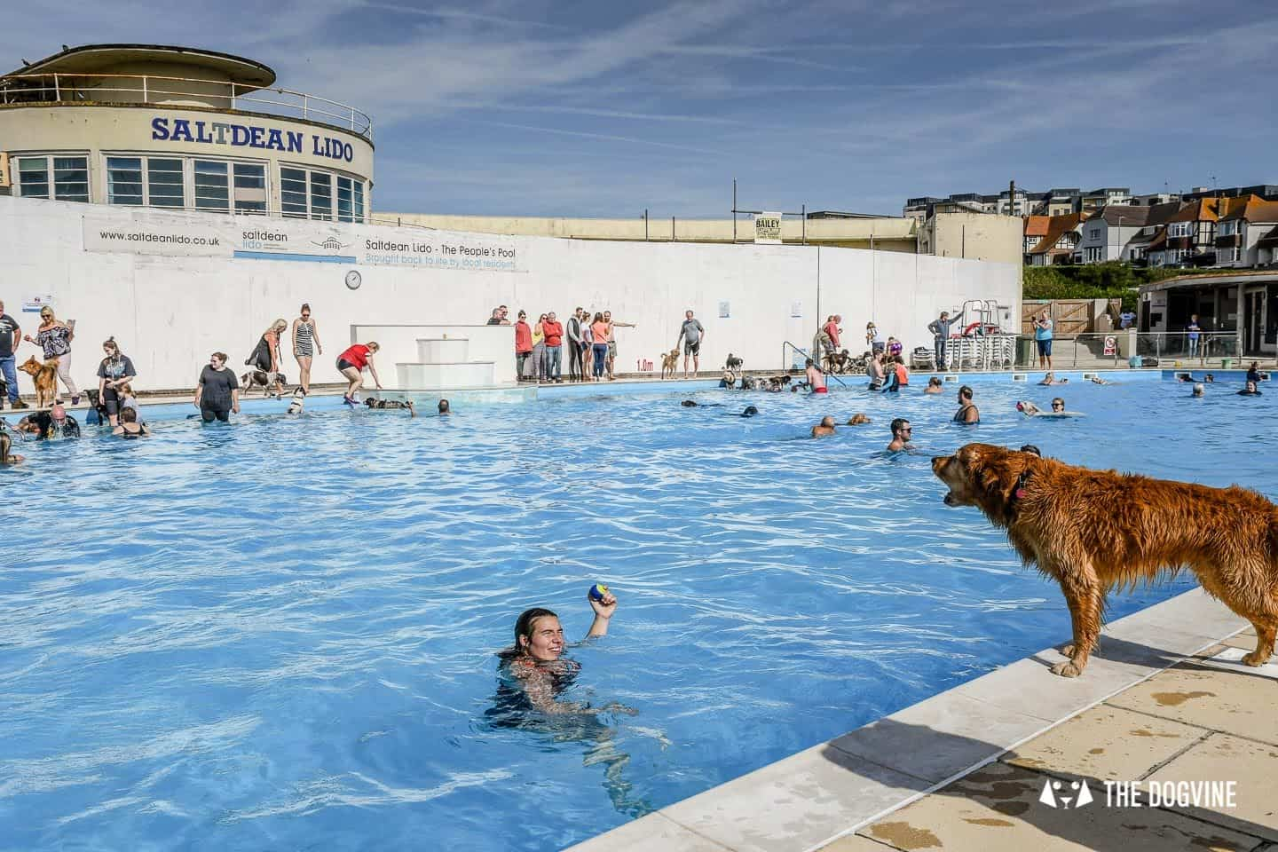 Saltdean Lido Dog Swim | A Fabulous Day Out for Dogs 2