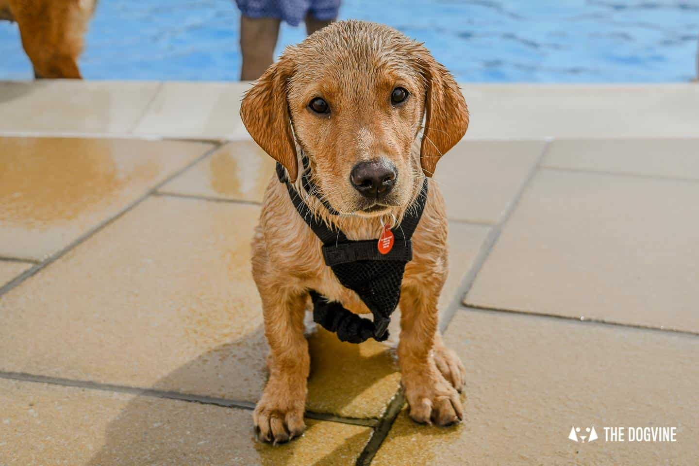 Saltdean Lido Dog Swim | A Fabulous Day Out for Dogs 23