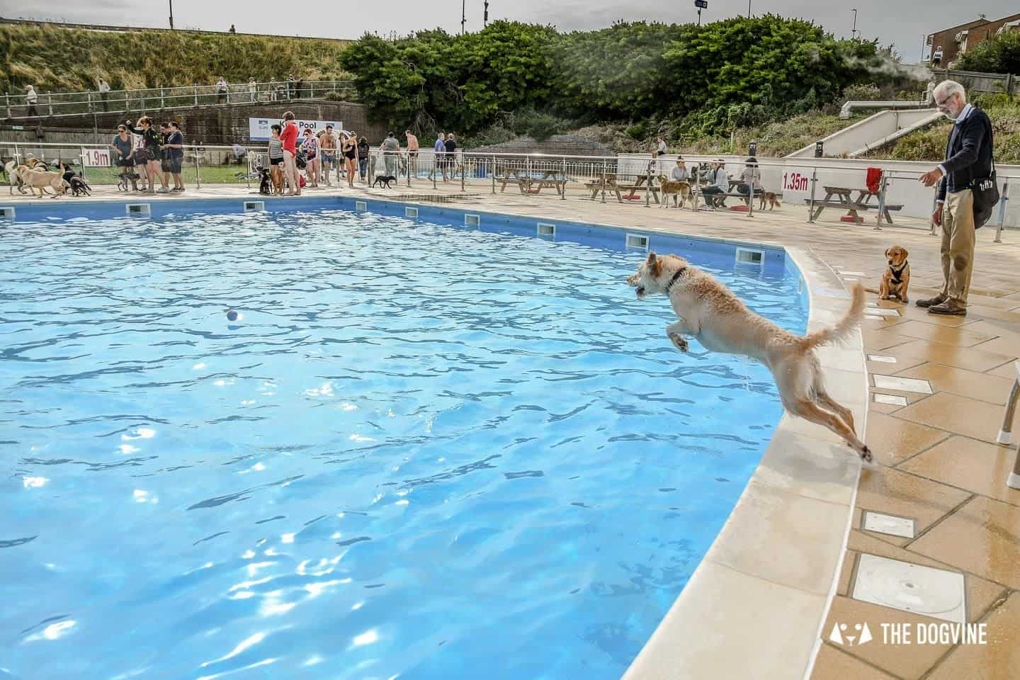 Saltdean Lido Dog Swim | A Fabulous Day Out for Dogs 25