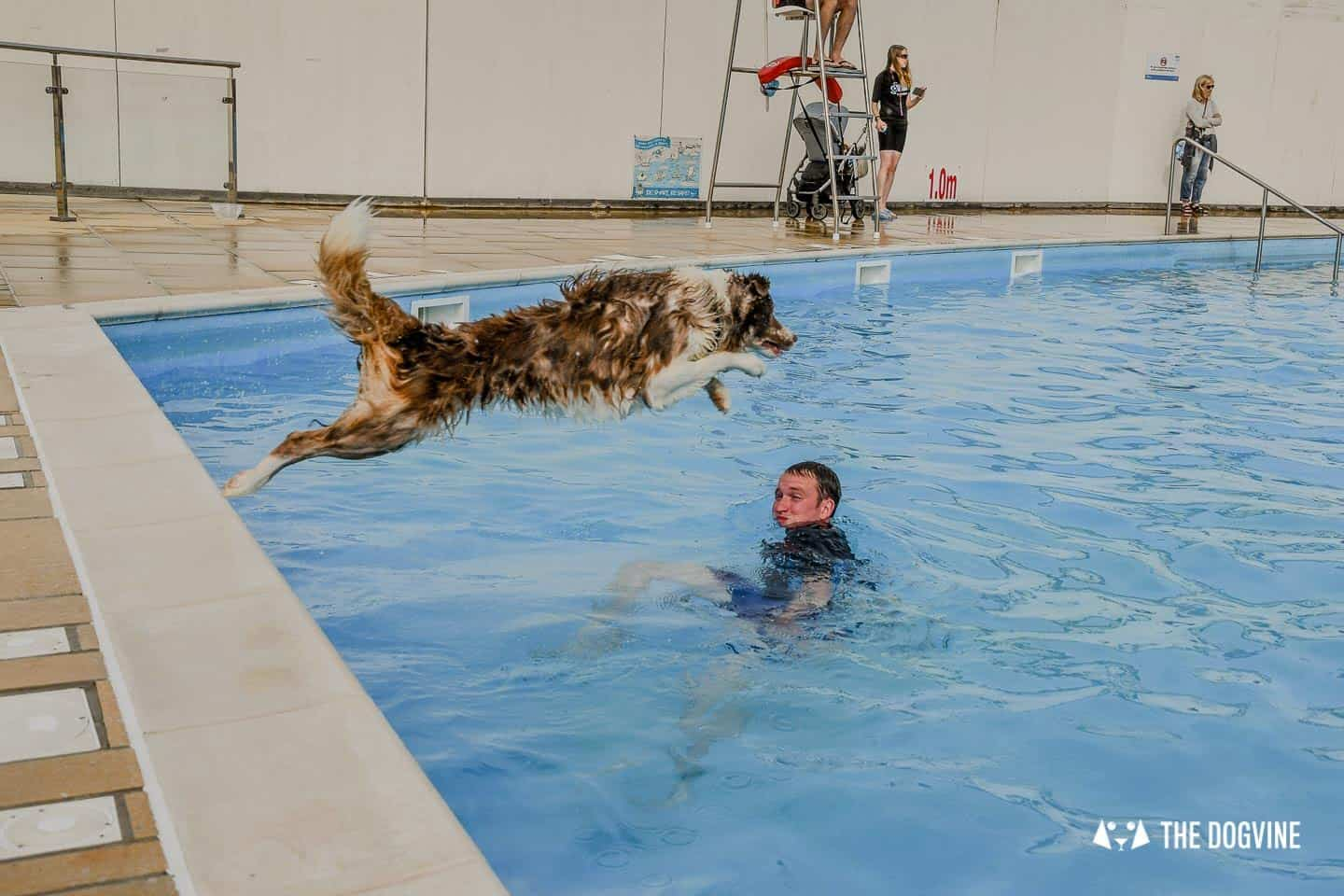 Saltdean Lido Dog Swim | A Fabulous Day Out for Dogs 28