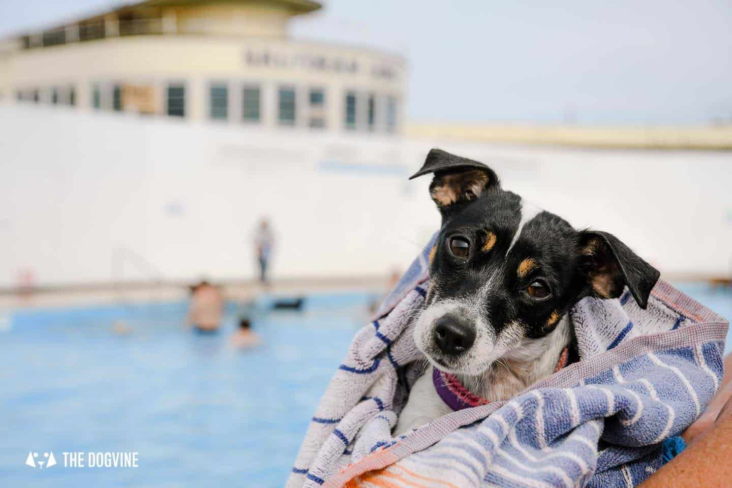 Saltdean Lido Dog Swim | A Fabulous Day Out for Dogs 29