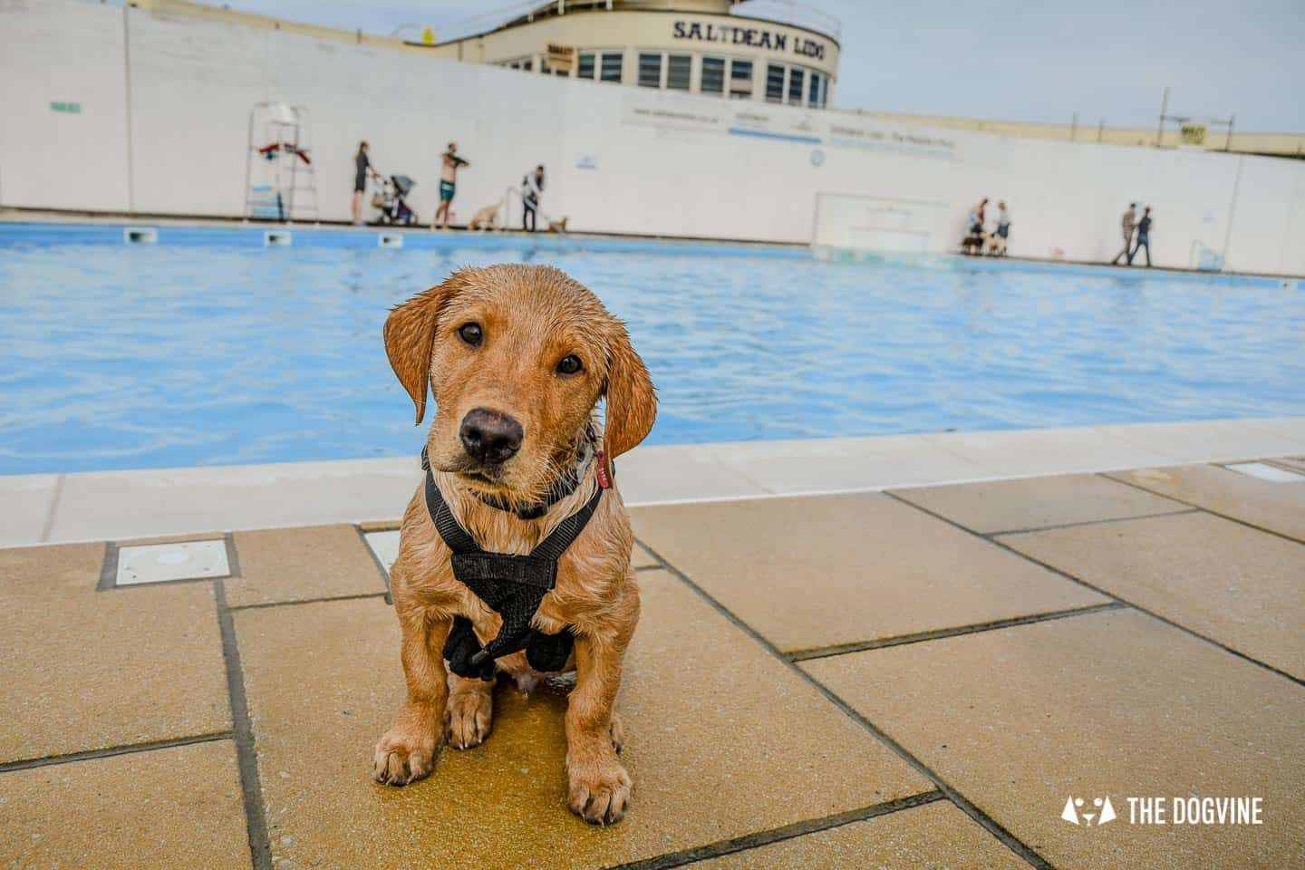 Saltdean Lido Dog Swim | A Fabulous Day Out for Dogs 31