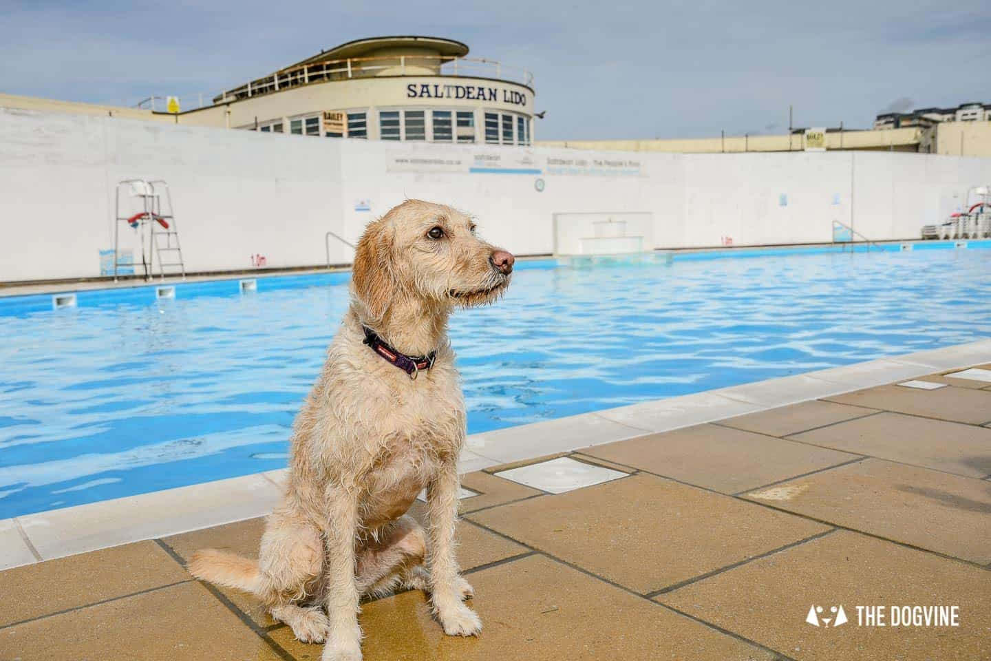 Saltdean Lido Dog Swim | A Fabulous Day Out for Dogs 33