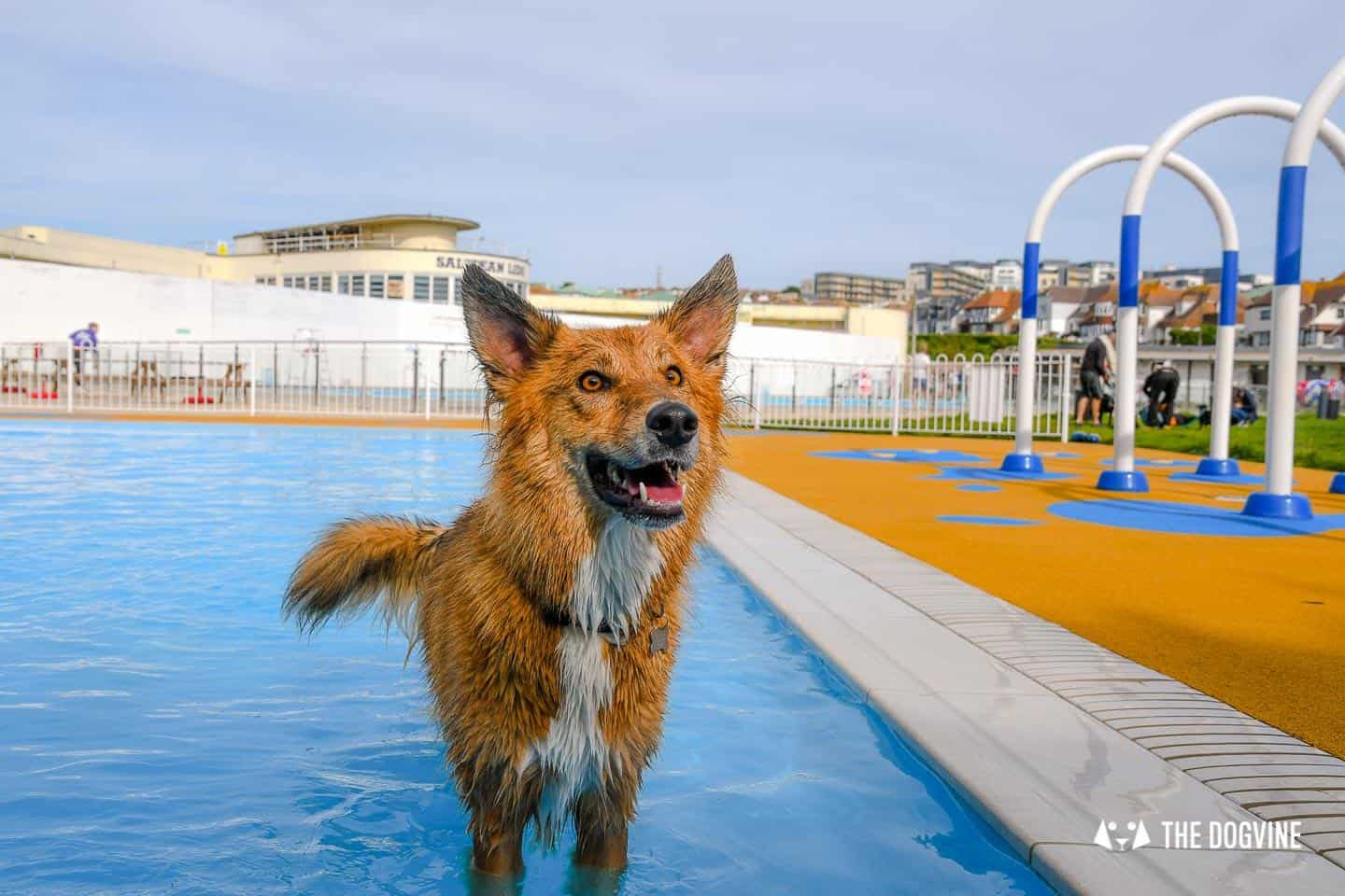 Saltdean Lido Dog Swim | A Fabulous Day Out for Dogs 38