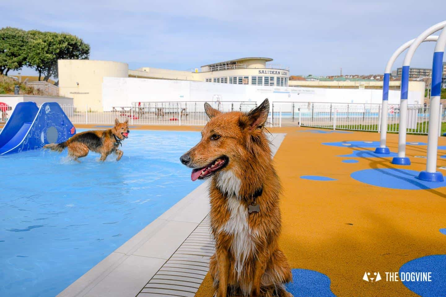 Saltdean Lido Dog Swim | A Fabulous Day Out for Dogs 40