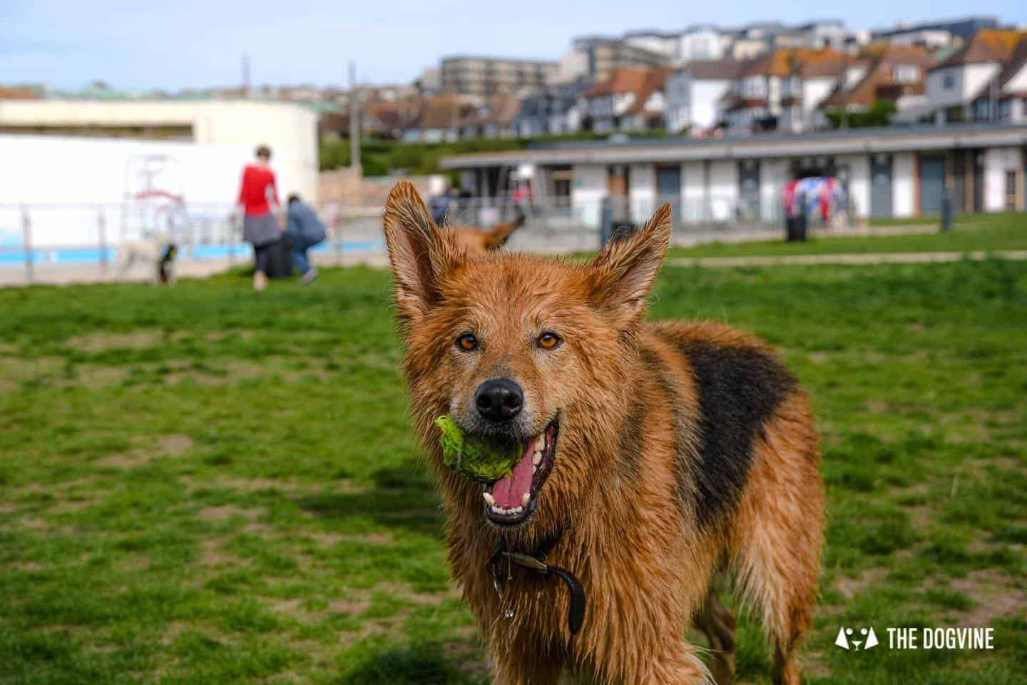 Saltdean Lido Dog Swim | A Fabulous Day Out for Dogs 45