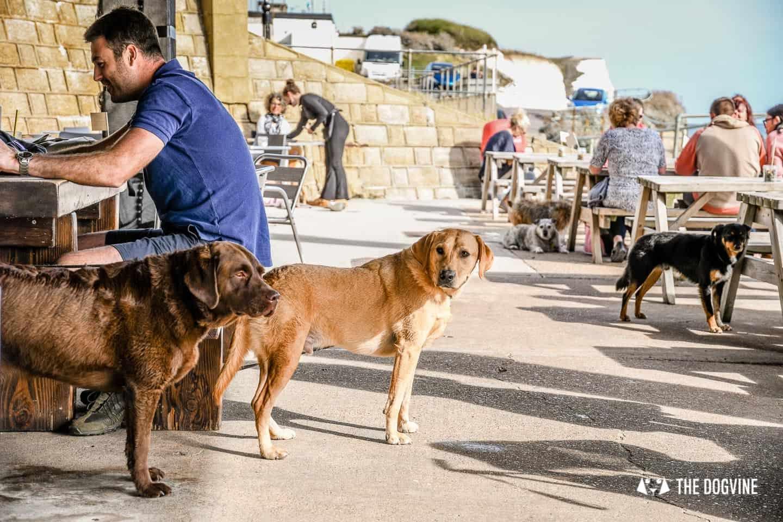 Saltdean Lido Dog Swim |White Cliffs Dog-Friendly Cafe Dogs