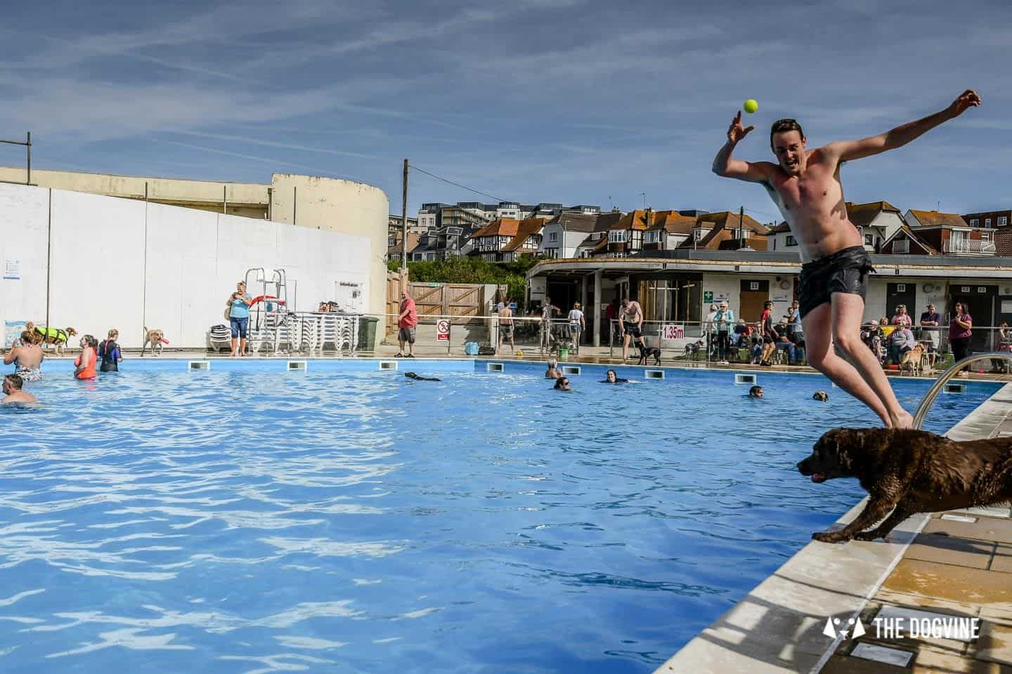 Saltdean Lido Dog Swim | A Fabulous Day Out for Dogs 5