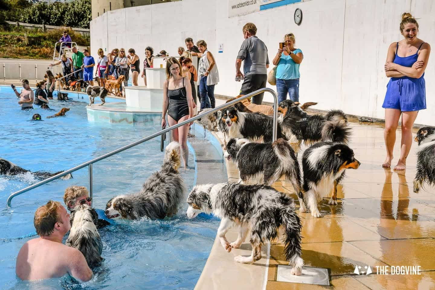 Saltdean Lido Dog Swim | A Fabulous Day Out for Dogs 8