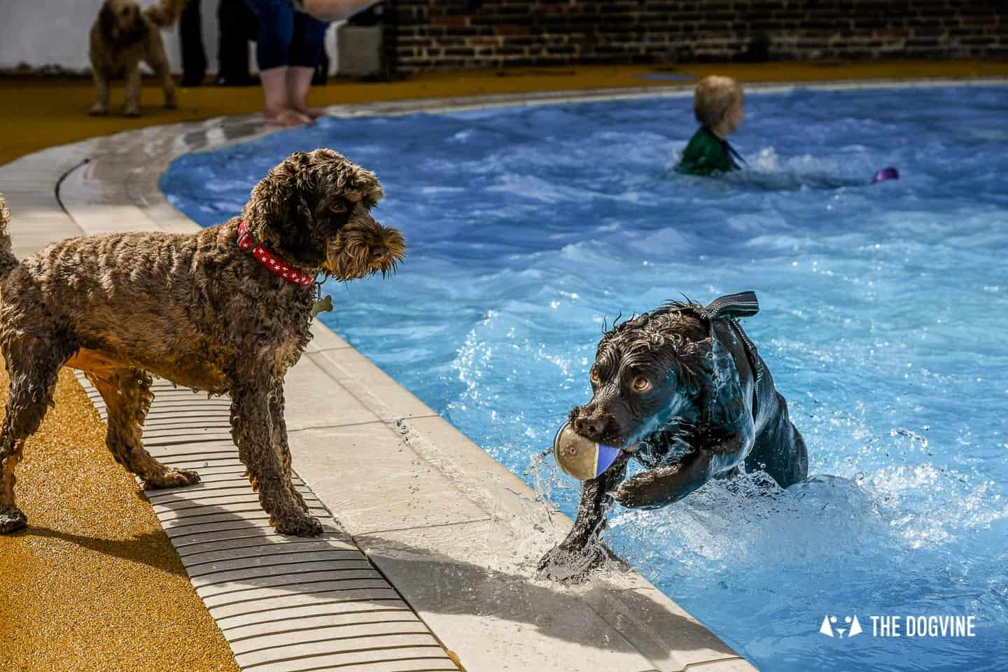 Saltdean Lido Dog Swim | A Fabulous Day Out for Dogs 9