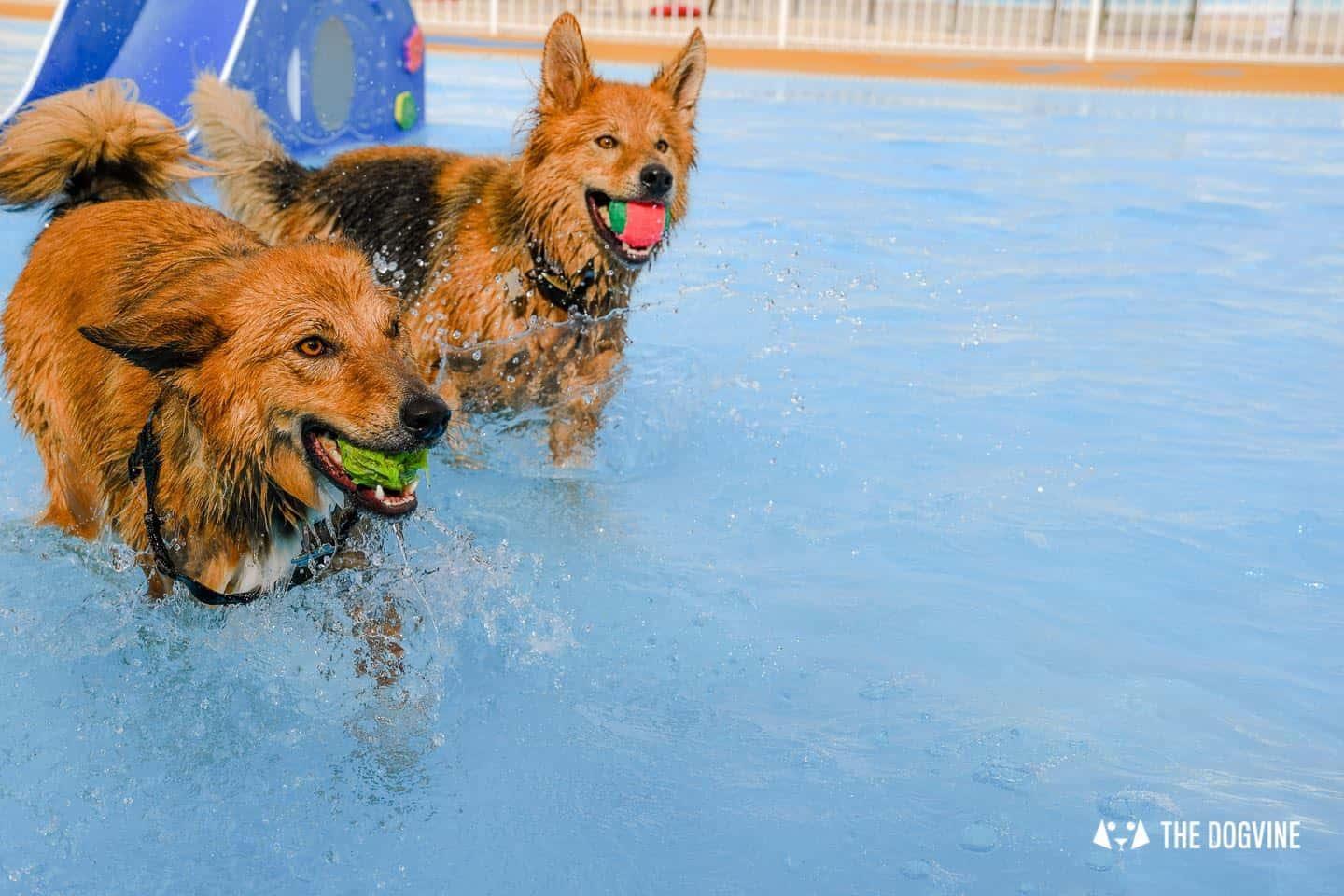 Saltdean Lido Dog Swim | A Fabulous Day Out for Dogs - Fozzy and Riley