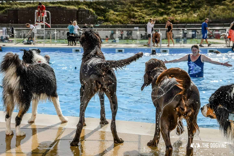 Saltdean Lido Dog Swim Tails Wagging