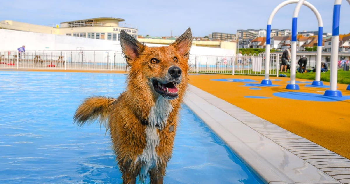 Saltdean Lido Dog Swim | A Fabulous Day Out for Dogs