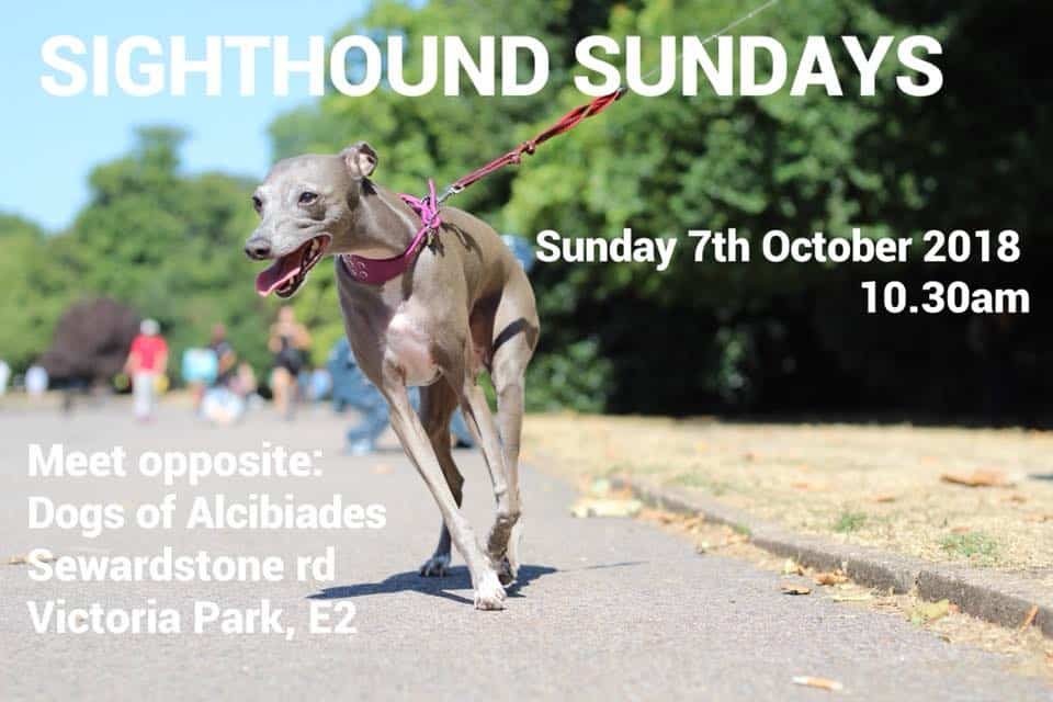 Sighthound Sundays Walk October 2018