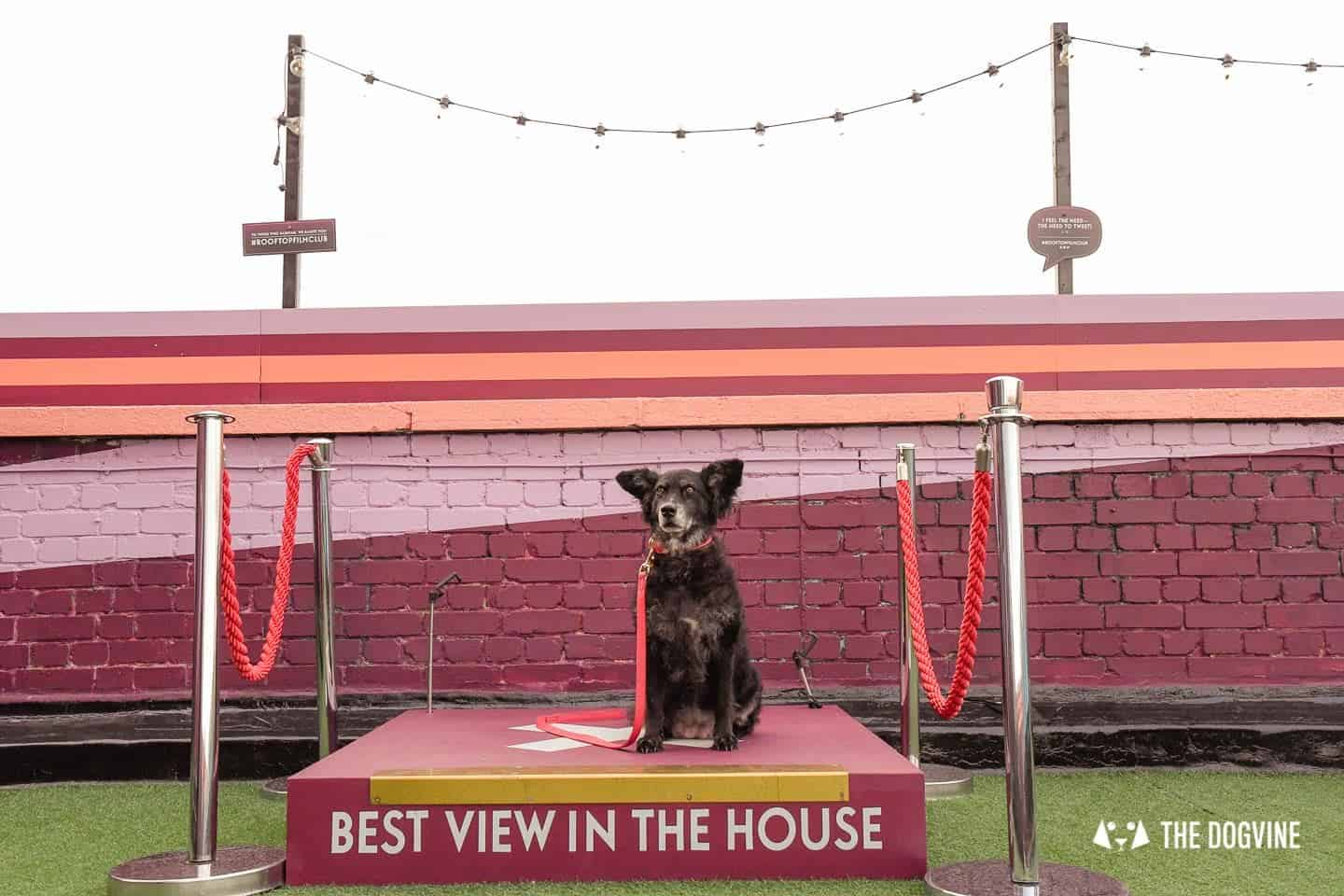 Spectacular Movie Moments at the Dog-friendly Rooftop Film Club 11