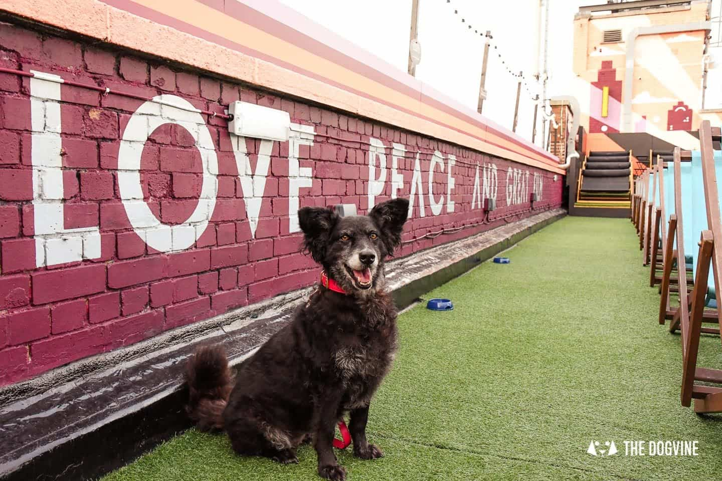 Spectacular Movie Moments at the Dog-friendly Rooftop Film Club 12