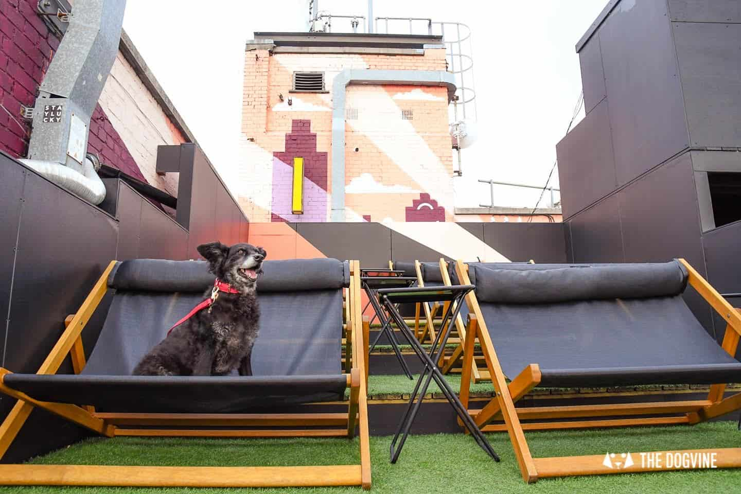 Spectacular Movie Moments at the Dog-friendly Rooftop Film Club 13