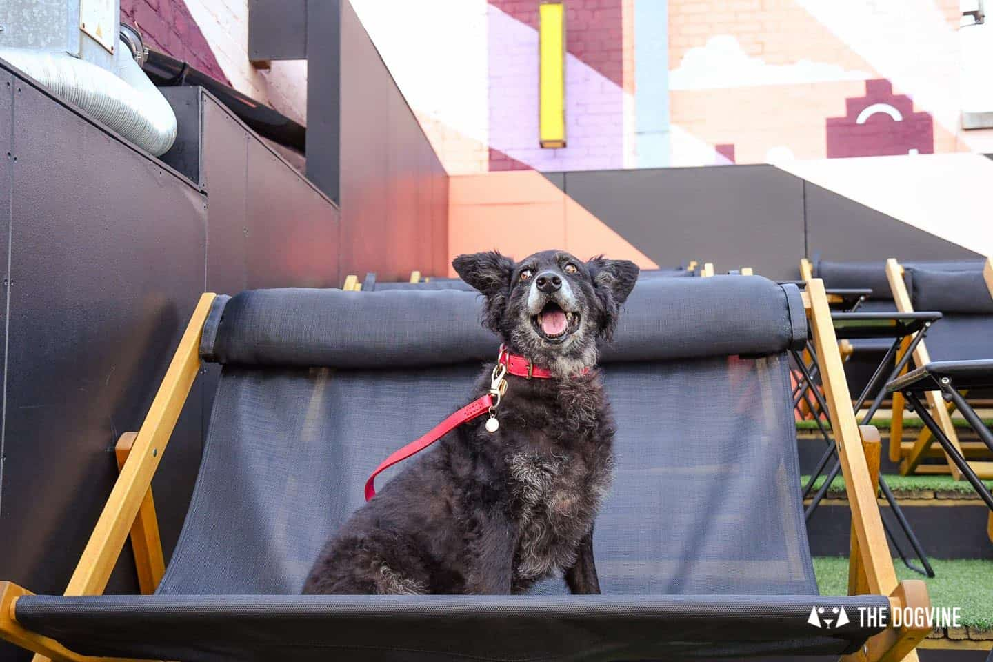 Spectacular Movie Moments at the Dog-friendly Rooftop Film Club 14